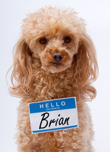 Dog lovers are now giving their pets traditional human names.