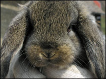 New guidelines OK the use of artificial human skin for chemical  testing, saving hundreds of rabbits from suffering