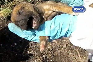 The first puppy was visibly fighting for its life as it was pulled from the ground