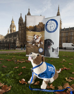 Battersea Dogs & Cats Home kicked-off the Staffie campaign at Westminster.