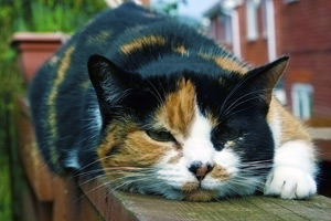 Are UK cats living longer?