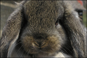 Rabbit Awareness Week 2011 will focus on the emotional well-being of Britain's third most popular pet.