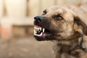 Wales has shelved its draft dog control bill