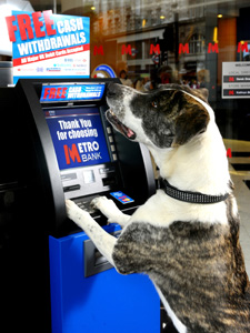 Metro Bank is now the Kennel Club's official banking partner