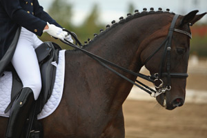 Chronic inflammatory small bowel disease seems to have a predominance in dressage horses.