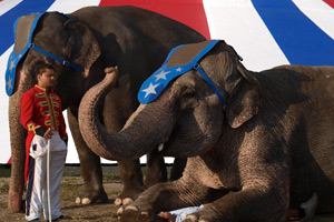 Circuses in England wishing to have wild animals would need to demonstrate that they meet