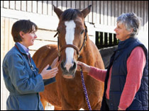 An equine vetVet in discussion with a horse owner