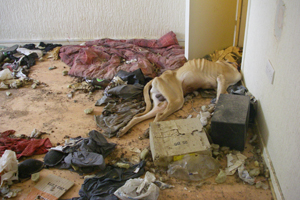 Headless dog left in squalor.
