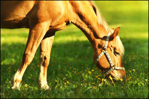 The top 3 equine issues, as revealed by the 1st National Equine Health Survey, are lameness, weight problems and skin disease.