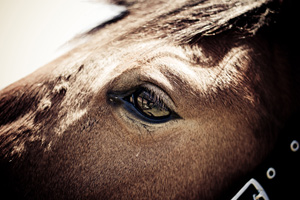 Academics have started investigating a treatment method for headshaking in horses.