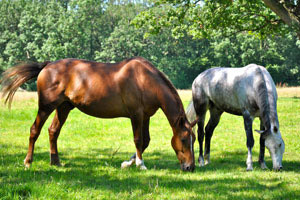 University of Surrey says its meeting is the first to be solely focused on endocrinopathies in horses.