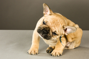 Despite the UK being a nation of pet lovers, research has shown pet owners are struggling to combat fleas more than ever.