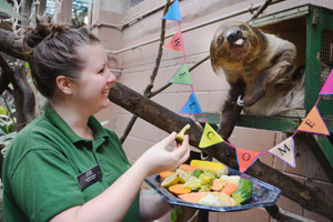 Two-toed sloth Leander bonds with keeper Tegan McPhail.