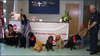 A family of seven Labradors  attend Pet Blood Bank in Sunderland to make donations