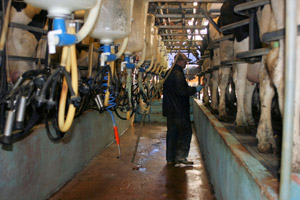 Fairer prices for dairy farmers
