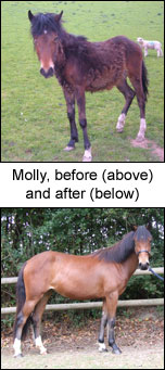 Molly, before and after