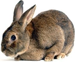 Rabbit whispering could fail to adequately address behavioural problems and encourage owners to mishandle their rabbits, causing more stress