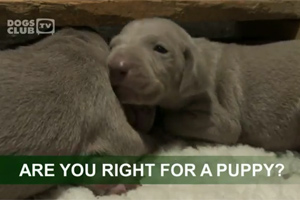 One of the videos from the club helps potential owners understand the responsibilities of owning a puppy
