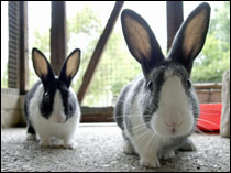 Rabbits are our third most popular pet with around one million rabbits currently being kept in the UK