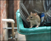 It is generally accepted that there are circumstances when rodents have to be killed