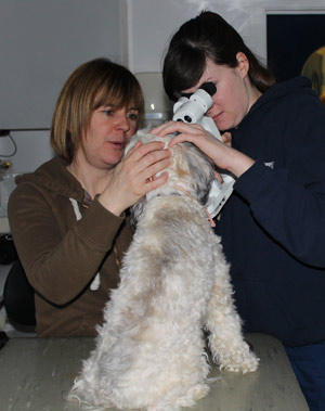 A specialist studies Rufus' eyes while Sarah, his carer, keeps him steady.