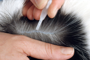 ICC's campaign is calling for the reclassification of permethrin-containing dog flea products from AVM-GSL to NFA-VPS so that customers receive advice at the point of sale.