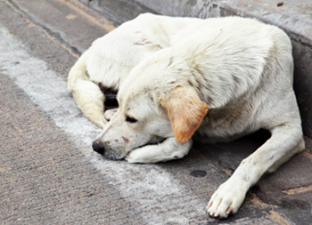 126,000 stray dogs handled by local UK authorities in 2011.