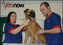 Vets Now open 37th OOH clinic