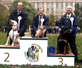 Westminster dog of the Year winners.
