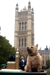 Star, Westminster Dog of the Year.
