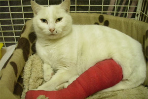 Winter the cat was found lodged halfway through a cat flap in Coventry with a broken leg.