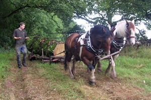 New show to chart the role that horses have played in the farming, agriculture and forestry industries.