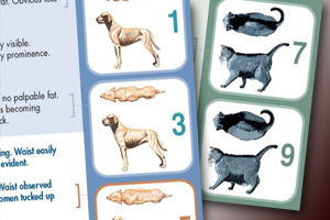 WSAVA body condition scoring (BCS) system for cats and dogs.