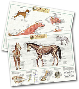 Canine and equine anatomical charts, as available from Veterinary Business Development