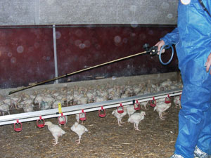 Spraying poultry