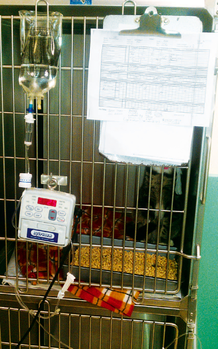 Infusion Systems Perspective : Urinary tract disorders in cats vet nursing essentials