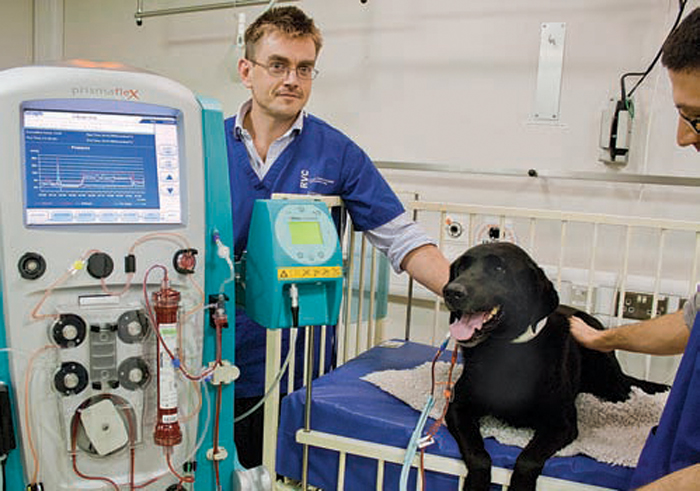 Kidney Dialysis For Cats In The Uk